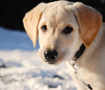 Puzzle piesek na śniegu – gra online dla dzieci