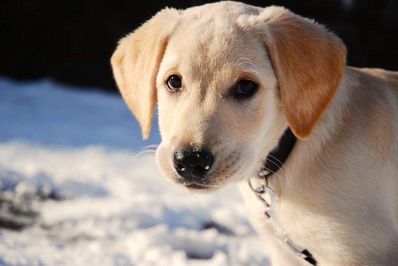 Piesek-na-śniegu