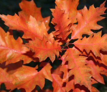 Sowa z jesiennych liści