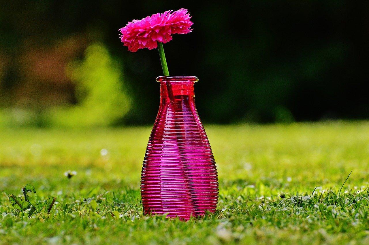 pixabay wazon kwiaty
