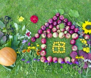 Jesienny obrazek z darów jesieni