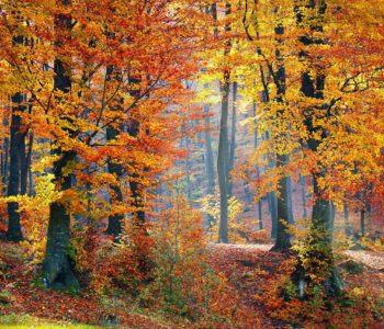 jesień liście drzewa krajobraz