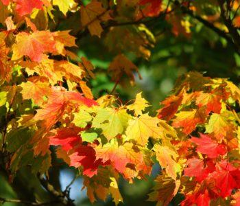 pixabay jesień drzewo liście