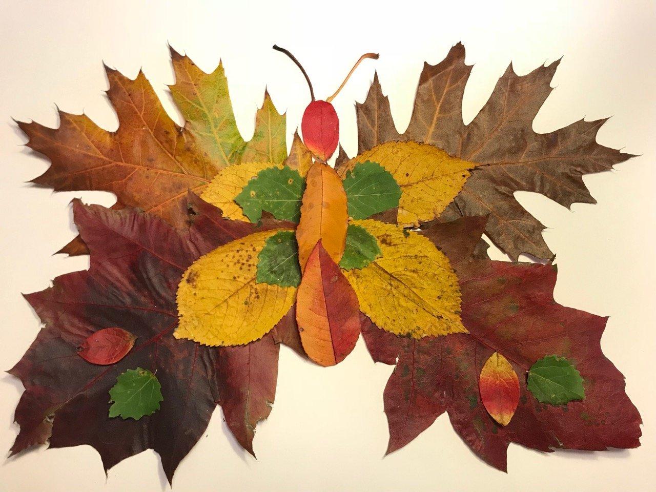 motyl z jesiennych liści