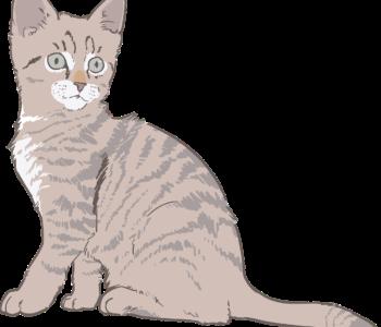 Kotek i włóczka