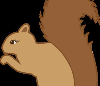 wiewiórka rysunek szablon