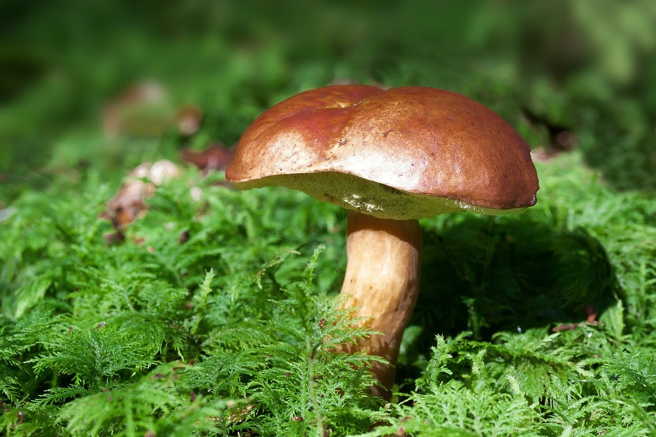 Grzyb w lesie - jesień lato