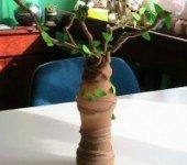 wiosenne-drzewko