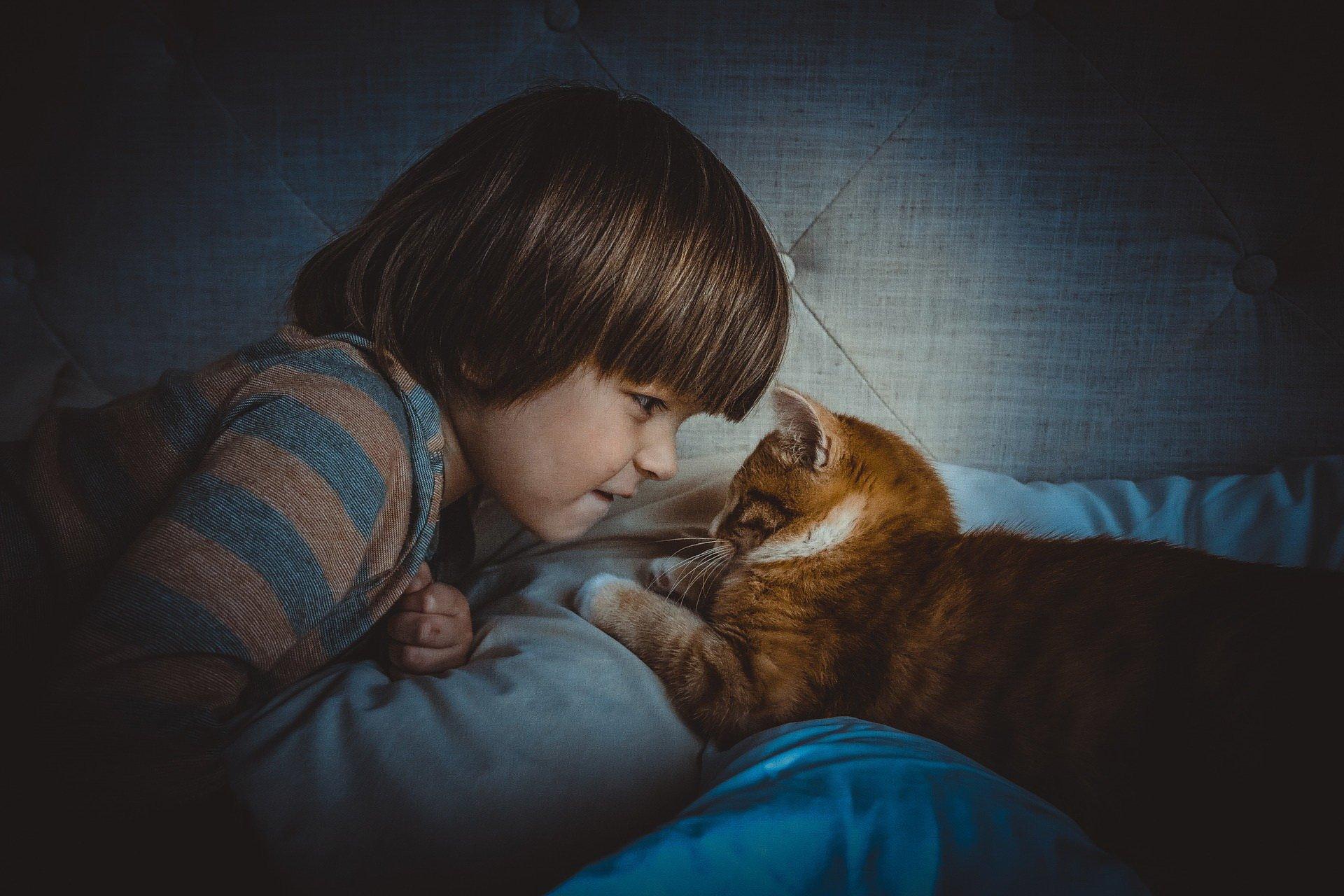 Agresywny chłopczyk z kotem