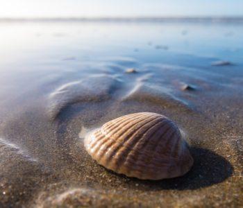 pixabay muszla plaża piasek