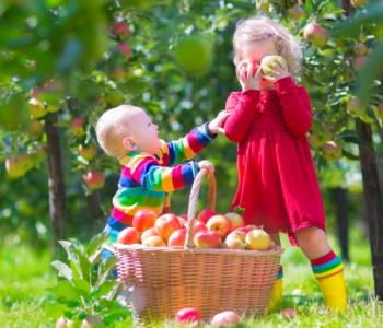 Przepisy na smakołyki z jabłkami