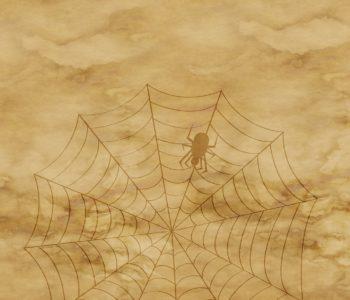 pixabay pająk pajęczyna