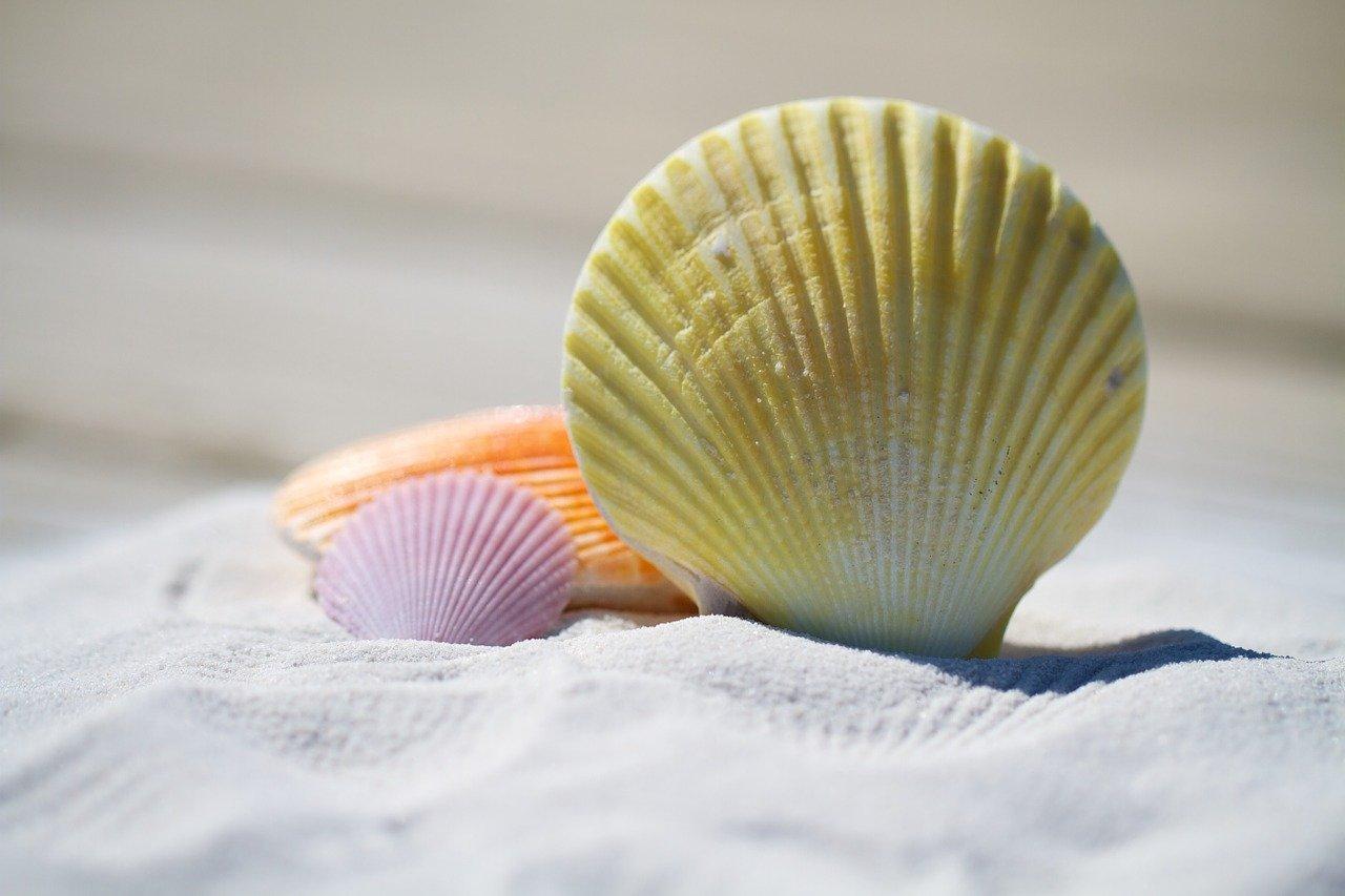 pixabay plaża piasek muszla