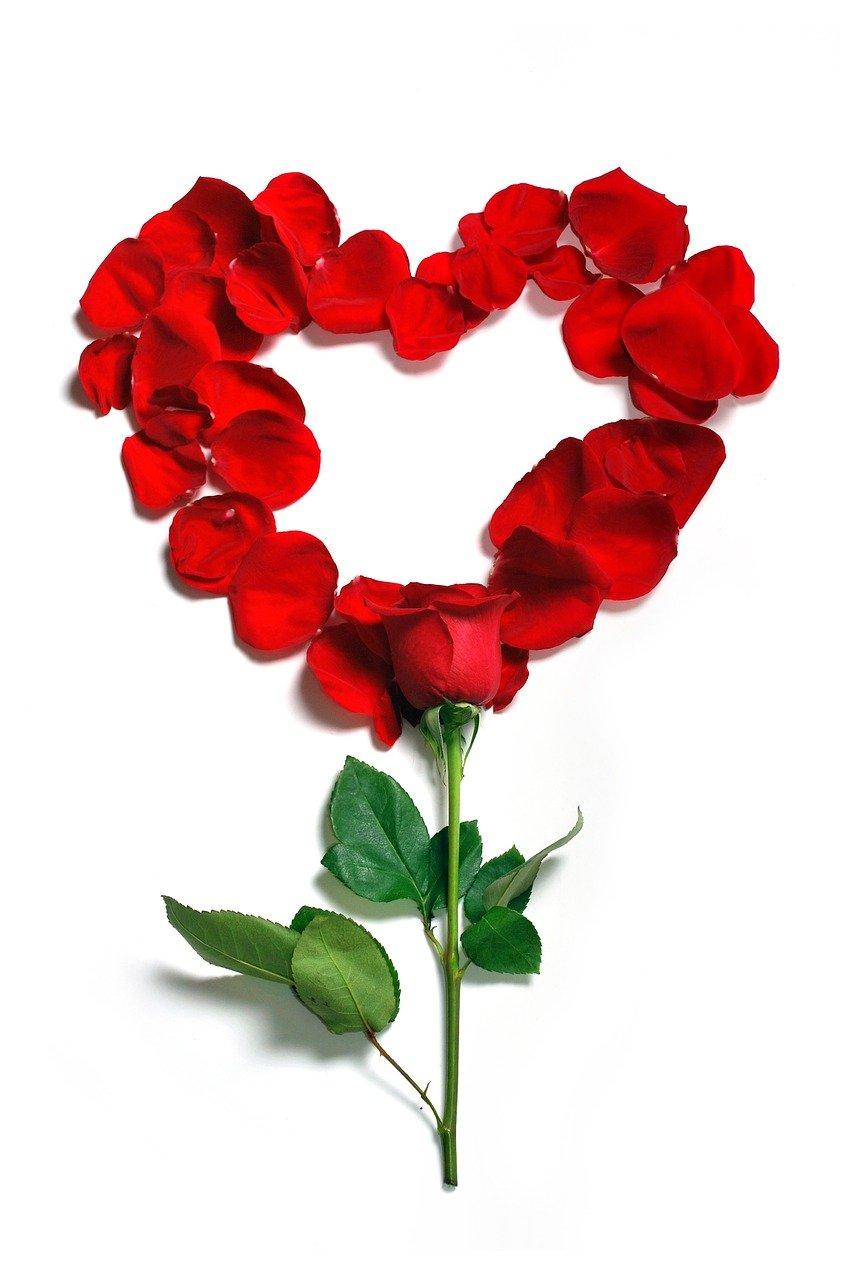 pixabay róża miłość walentynki