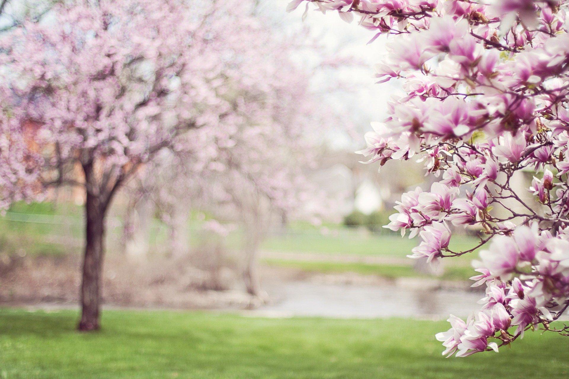 Scenariusz zajęć na powitanie wiosny