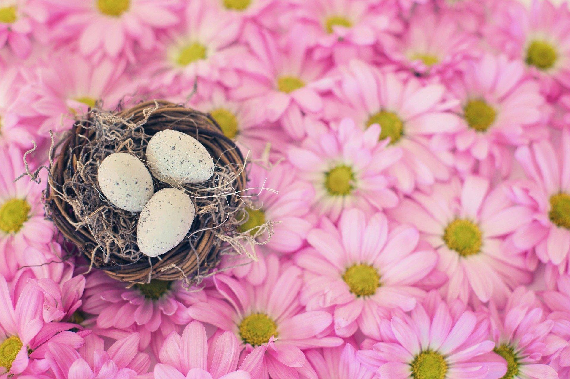 wiosenne zabawy gniazdko