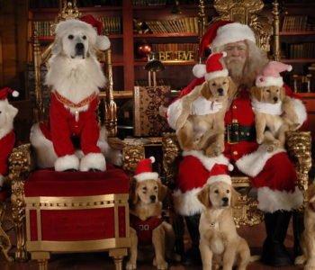Świąteczne-psiaki