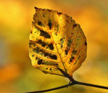 Gliniana jesienna zawieszka