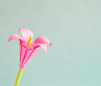 pixabay kwiaty origami papier