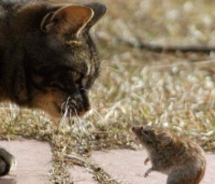 kot i myszka