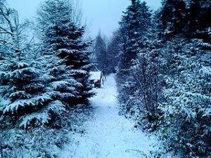 Zima w mieście 2011 w Krakowie