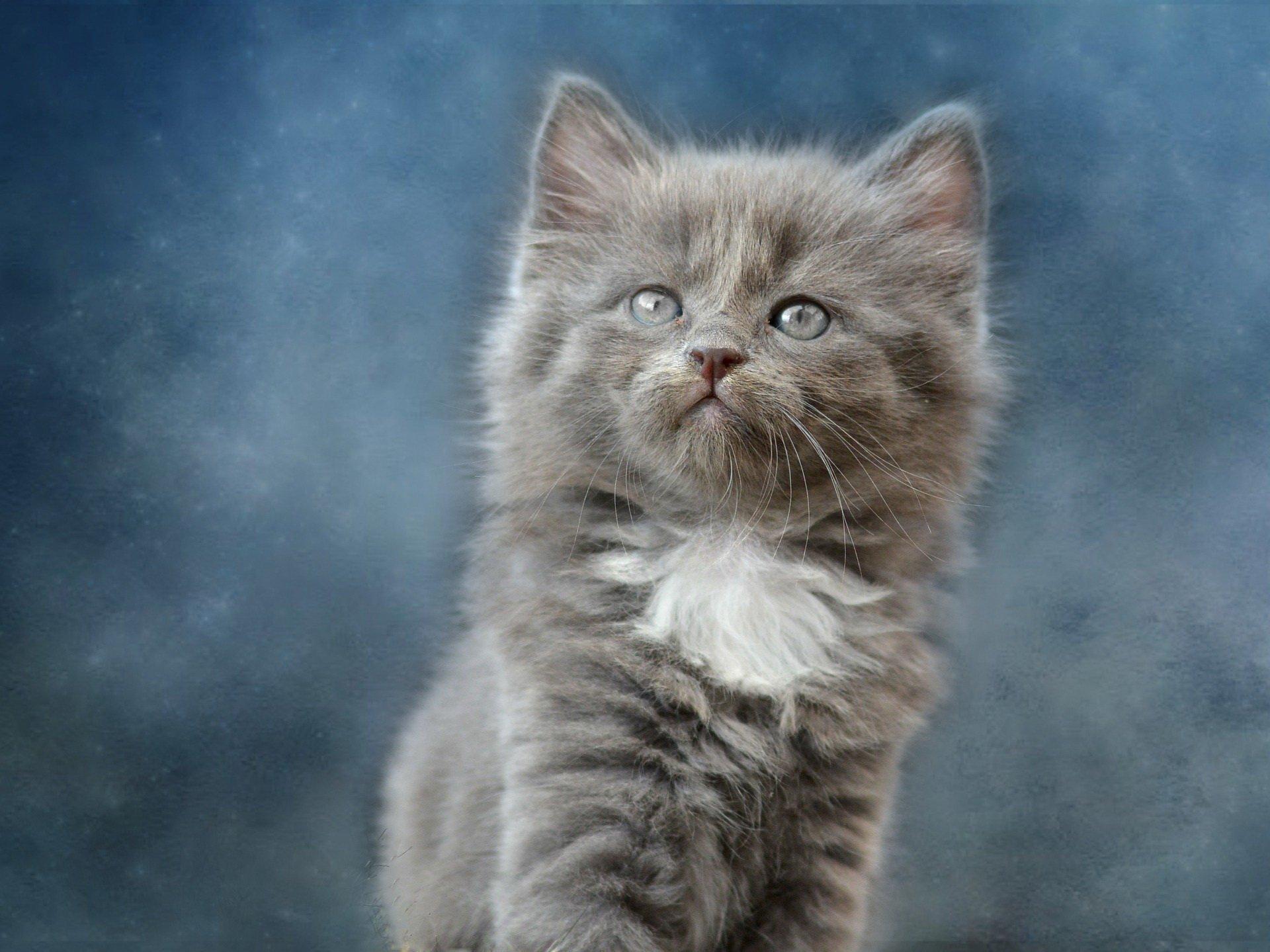 wiersz o kotku Wasylu, wiersze i piosenki dla dzieci o zwierzakach