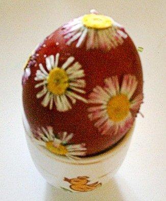 Roślinne suszki na jajku