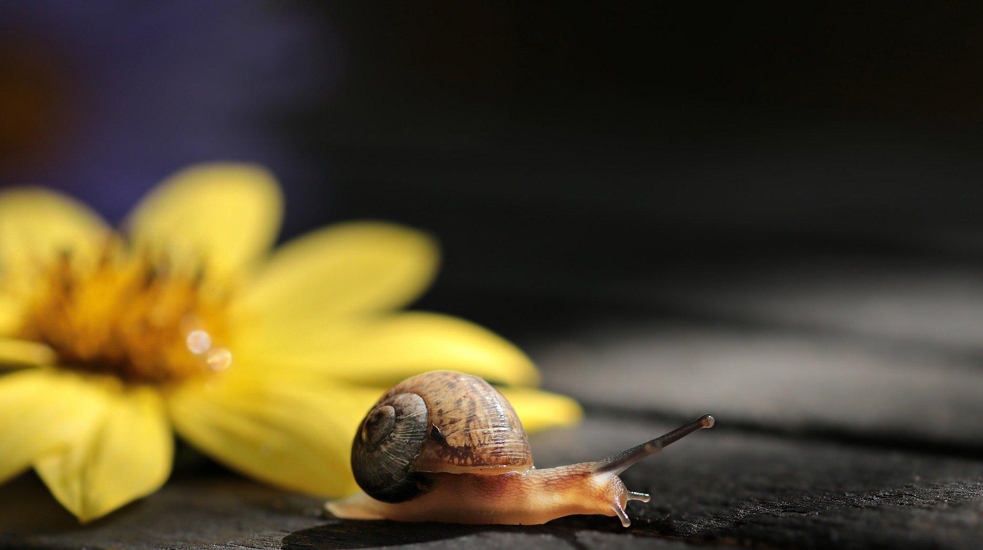 Piosenka o ślimaku, tekst i melodia
