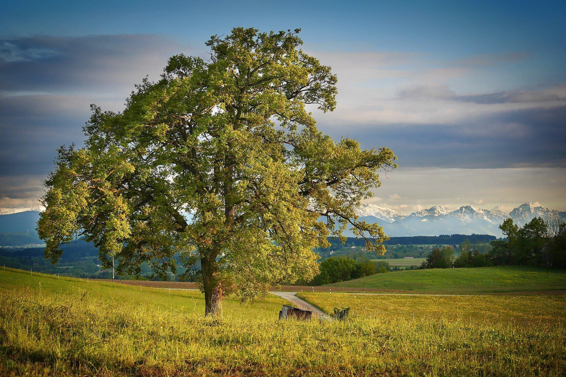Wierszyk o drzewie, wiersze i piosenki dla dzieci