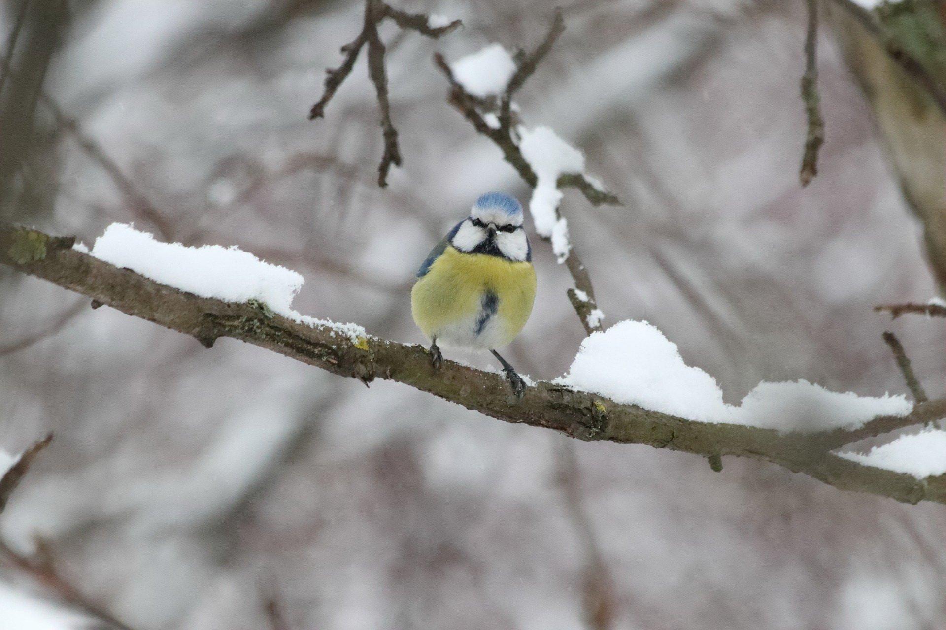 Zimowy wierszyk o ptakach dla dzieci