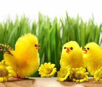 Wierszyki dla dzieci na Wielkanoc