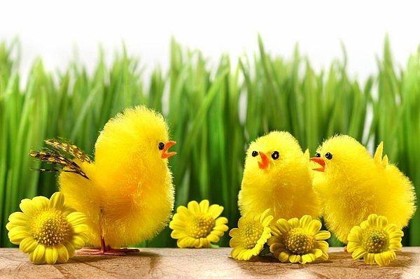 Wierszyki Na Wielkanoc Wierszyki Wielkanocne