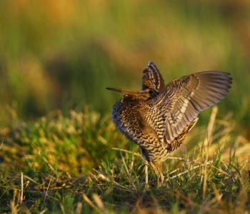 Dubelt ciekawostki o ptakach