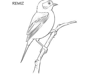 Remiz ptak