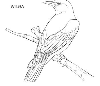 Wilga ptak