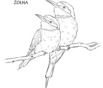 Żołna ptak