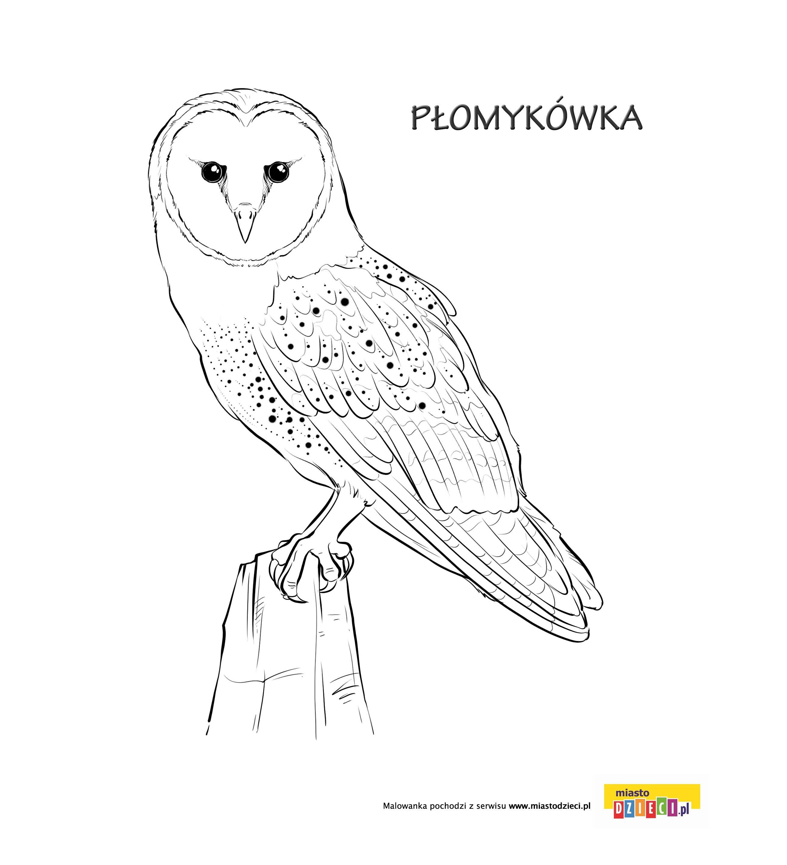 Sowa kolorowanka