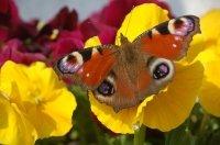 Barwne życie motyla