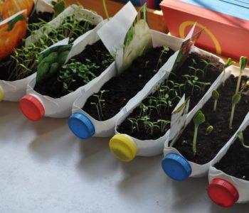 Zielony ogródek w domu. Recykling plastikowych butelek.