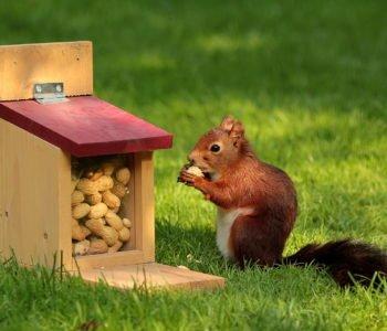 Wiewiórki i ich zagrożenia