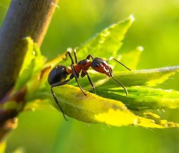 Mrówki i ich zwyczaje