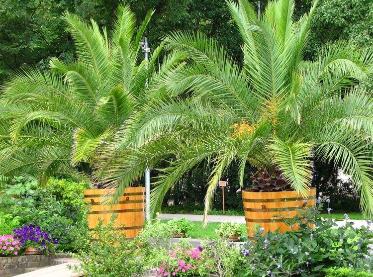 Egzotyczni-mieszkańcy-Pałacu-i-ogrodów