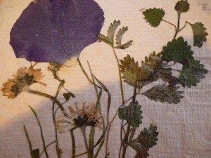 Obrazy z kwiatów i papieru