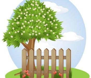 Bajka o drzewach do czytania dzieciom na dobranoc