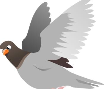 Twardziel, bajka o gołębiu