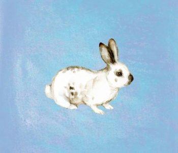 Bajki dla dziewczynek króliczek