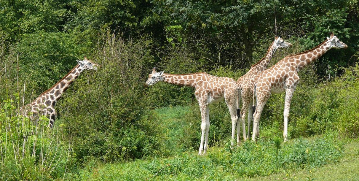 zoo poznań