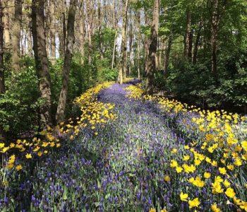 Ile głosów w lesie, wierszyk dla dzieci na wiosnę