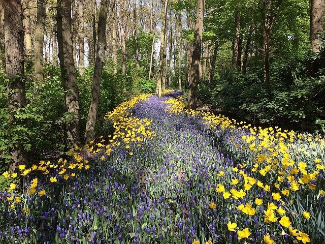 Ile Głosów W Lesie Wiosenny Wierszyk Dla Dzieci Piosenki I