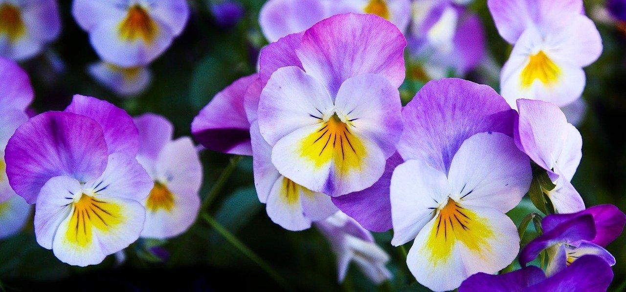 Kwiatowa wróżka, piosenka dla dzieci na wiosnę, tekst i melodia